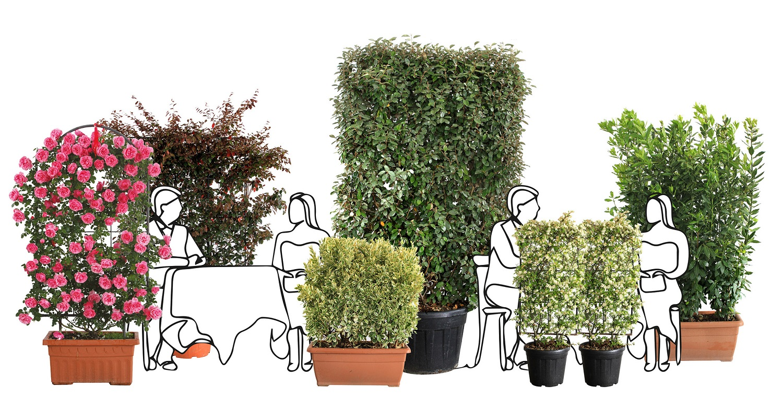 piante come distanziatori sociali